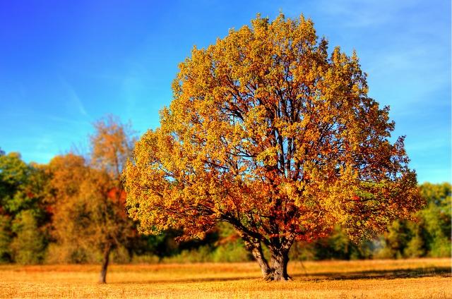 Herbst In Ungarn – Wo Relaxt Es Sich Am Besten